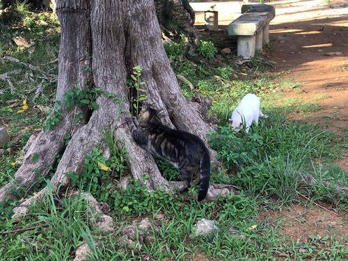 blog-482公園のネコ1.jpg